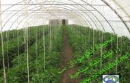 تمكين الشباب وخلق آفاق للتوظيف في الأعمال الزراعية