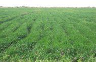 وسط دارفور تؤكد أهمية تأمين الموسم الزراعي وتوفير حاصدات لقري العودة الطوعية