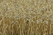 فاو: أسعار الغذاء العالمية تهبط في يونيو بفعل تراجع الألبان