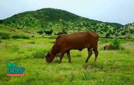 وفد اقتصادي من  البرازيل يبحث فرص الاستثمار في مجال صناعة اللحوم