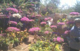 افتتاح مهرجان زهور الخريف السنوي ٢٠١٨ م