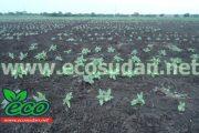 3 محاصيل.. خطوات حفر الآبار واستصلاح الأراضى بمشروع المليون فدان