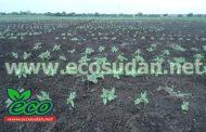 وزير الزراعة السوداني يوكد استعداد الحكومة لدعم الموسم بولاية النيل الازرق
