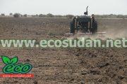 تشكيل لجنة للبت في صادر الفول السوداني