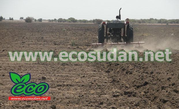 القضارف تعلن زراعة (7.6 ) ملايين فدان هذا العام