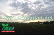 السودان يحذر من هطول أمطار غزيرة ببعض الولايات