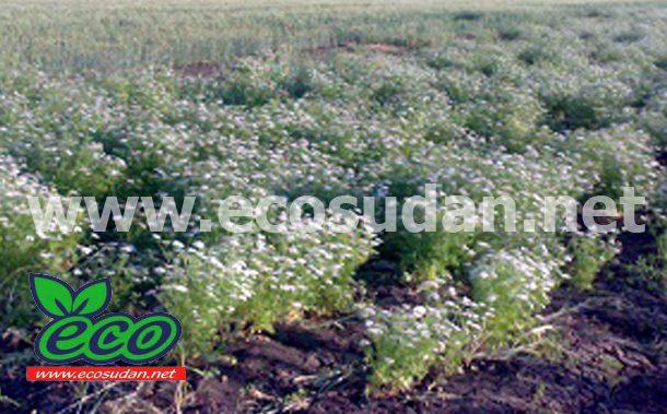 مزارع دينا المصرية تسعى لزيادة الرقعة المزروعة بمعدل 500 فدان سنويا