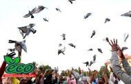في اليوم العالمي للسّلام... السودان يطلق 660 من حمام الزاجل