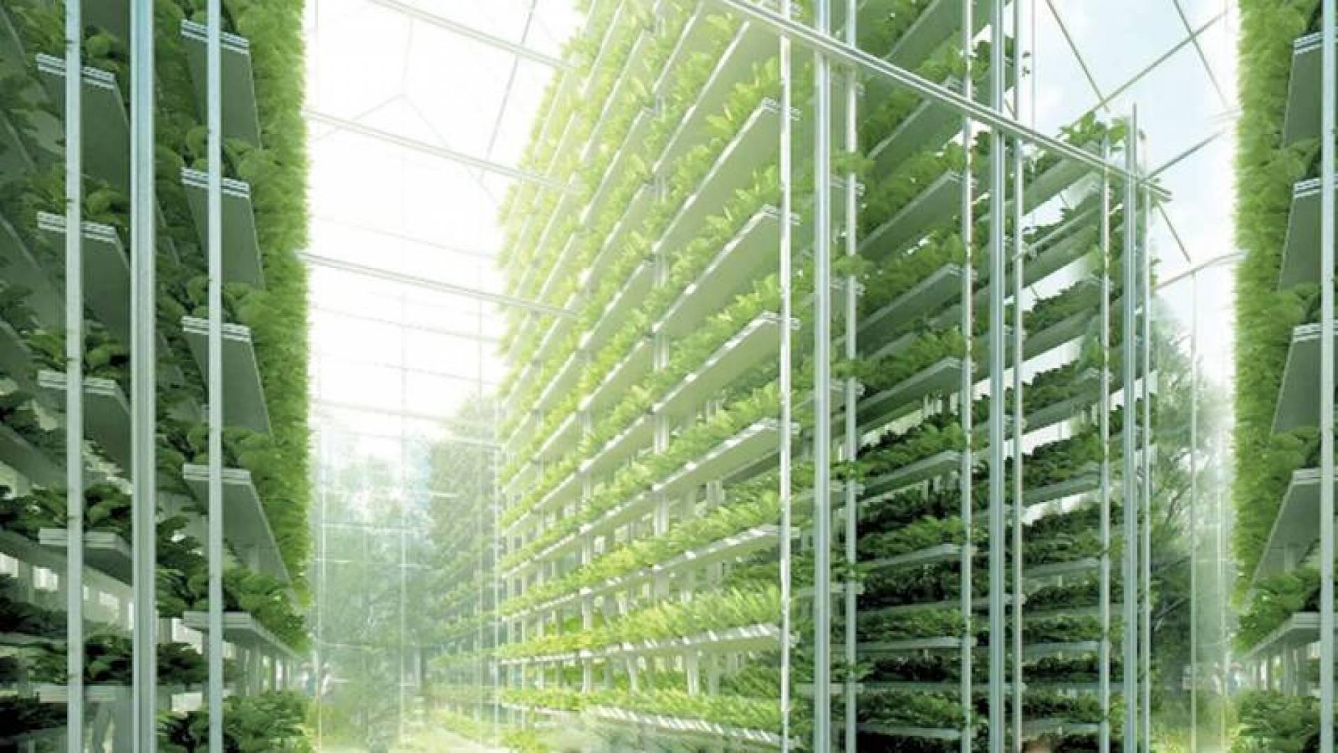 أول مزرعة عمودية كويتية تبدأ الإنتاج.. قريباً