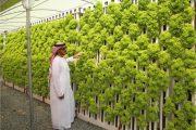 تحقيق لجريدة الخليج يكشف عن تحوئل  الرمال إلى خضرة ومنتجات زراعية