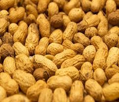 غرفة المصدرين:عائدات الحبوب الزيتية تفوق المليار ونصف مليار دولار  والذهب خمس مليار دولار  الخرطوم