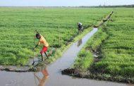 صادرات إثيوبيا الزراعية تقهر أسراب الجراد الصحراوي