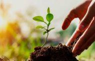 إثيوبيا تقدم 316 مليون شتلة أشجار إلى السودان