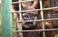 أغنياء العالم يتحملون جل مسؤولية انقراض الحيوانات والنباتات البرية